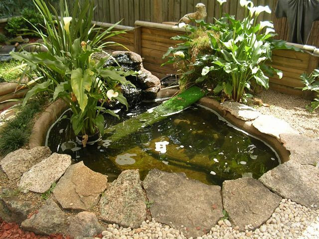 35 Favorite Turtle Backyard Pond - Home, Family, Style and ...